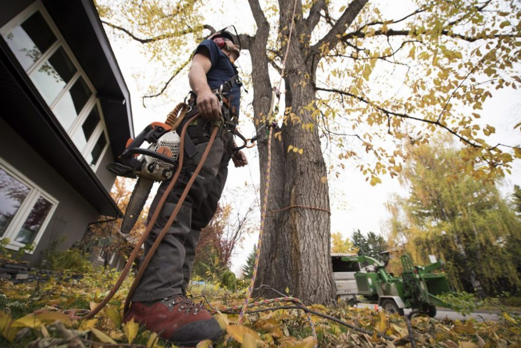 Mesa Tree Service Pros